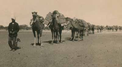 Afghan camel train